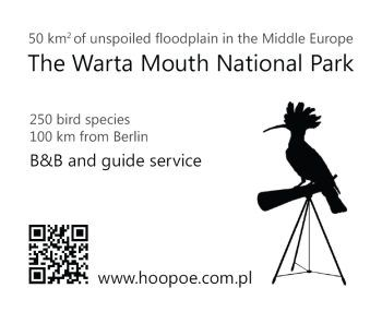 Advertisement www.hoopoe.com.pl