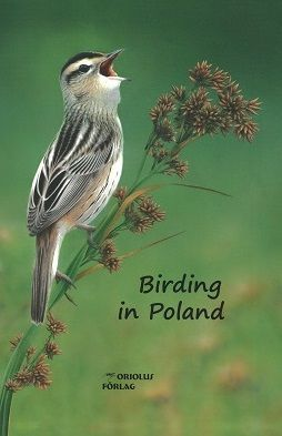 Birding in Poland, birdwatching, Aquatic Warbler,